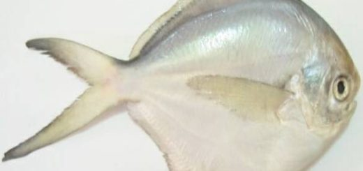 ماهی زبیدی